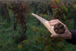 宇宙との調和を目指して バイオダイナミック農法とおいしいワインの秘密
