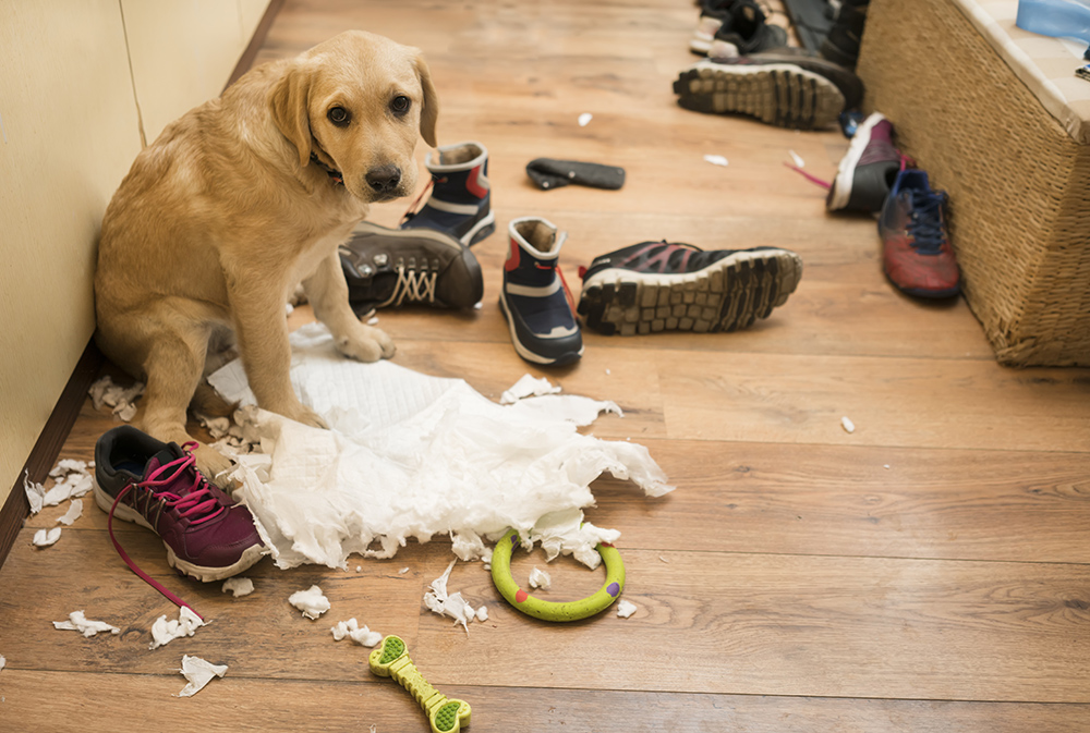 dog_who_ripped_up_paper_towels_and_feeling_really_guilty_about_it_now.jpg