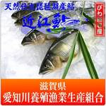 愛知川養殖漁業生産組合