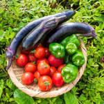 「朝採り野菜」 ~農家さんとマチルダのコラボ商品