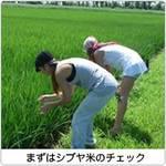 シブヤ米農作業レポVOL.6 ~ハーブ植え