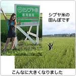 シブヤ米農作業レポVOL.7 ~秋田合宿