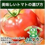 これからが旬「JAタウン」のトマトはいかが?