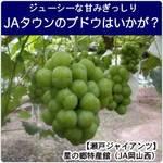 甘みぎっしり「JAタウン」のブドウはいかが?