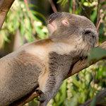 春の睡眠トラブル「ぐったり疲れているのに、眠れない!」「やっと寝たら最後、朝起きられない!」