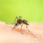 蚊のシーズン到来! 住まいの蚊対策<前編>