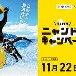 <ニュース>猫による猫のための会社nyans(ニャンズ)、猫の力で北海道を盛り上げるのにゃ!「ニャンドラキャンペーン2」サツドラで開始にゃ!