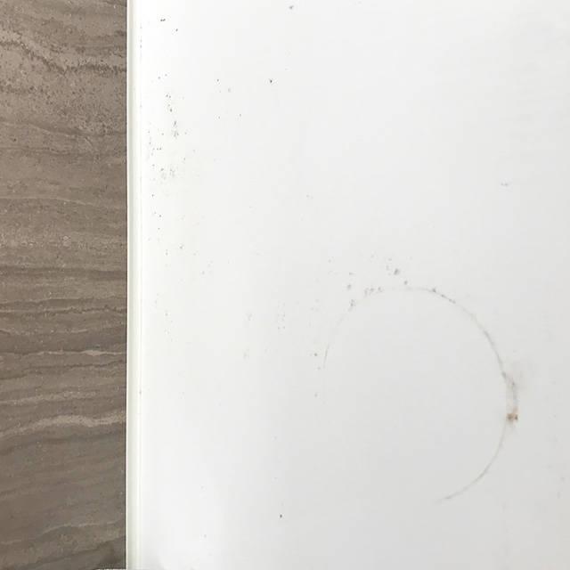 天井に近い壁のほうまで……。丸くなっているのは、吸盤の...