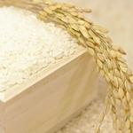 日本酒の材料は酒米!白米と酒米のカロリーはどう違う?