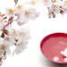 皆に喜ばれる、お花見で準備するおすすめ日本酒とは?