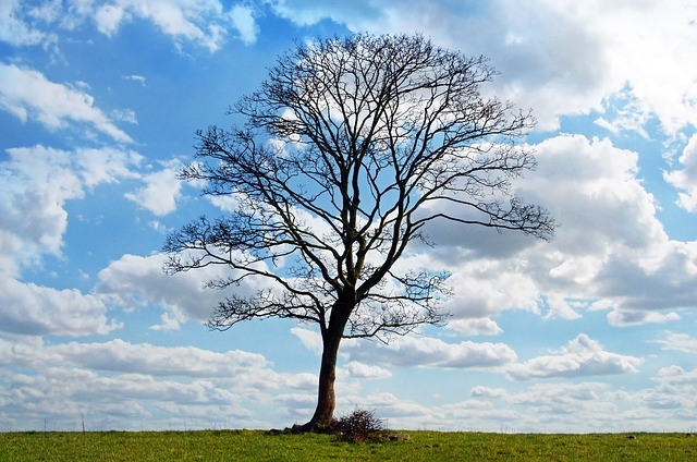 Free photo: Tree, Blue, Sky, Branch, Branches - Free Image on Pixabay - 164915 (429)
