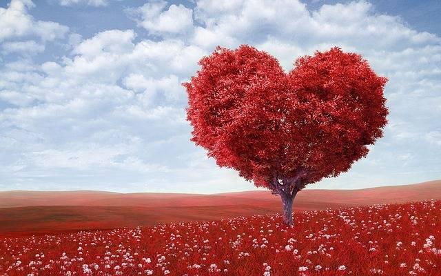 Heart-Shape Tree Red - Free photo on Pixabay (7146)