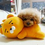 愛犬&愛猫のお土産に最適♫ 韓国で大人気のペットアイテム♡