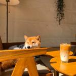 可愛いわんちゃんに癒されながら♡ 韓国・釜山の可愛すぎる『看板犬のいるカフェ⑤選』