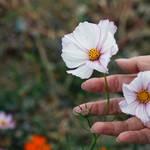 秋の自然を満喫♬ ソウル近郊にあるオススメ植物園③♡