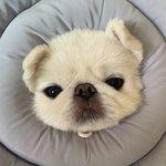 日本とはちょっと違う?「韓国で人気の犬種BEST⑨」をご紹介♡