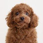 ペットに癒されたい方!可愛い愛犬の愉快な日常を映した動画が韓国で話題♡