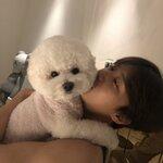 可愛すぎて溺愛中❤︎❤︎❤︎韓国芸能人の愛犬たちを大公開!