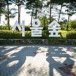 韓国に行くならここ!ビジュアル最高のカフェスポット「ソウルの森」をご紹介♡