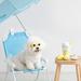 【国内購入可能】愛犬も韓国コーデ? 韓国『BITE ME(バイトミー)』のペットグッズをご紹介♪♡ - 韓国情報サイト Daon[ダオン]