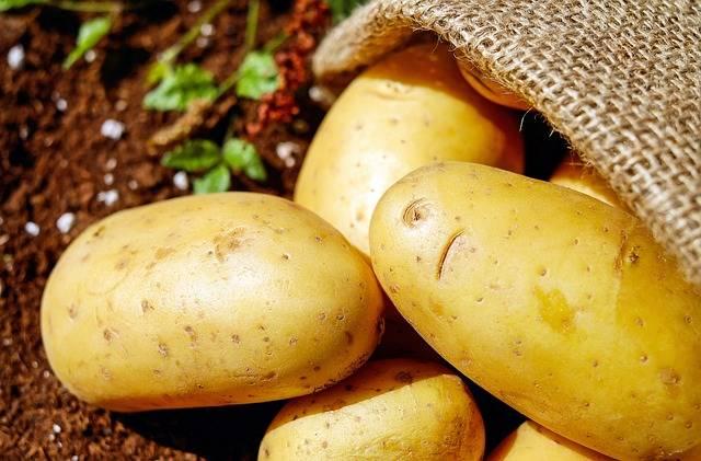 Potatoes Vegetables Erdfrucht · Free photo on Pixabay (1149)