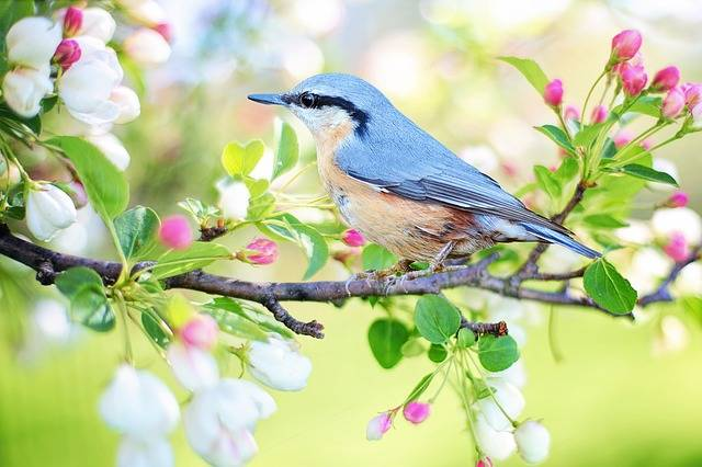 Spring Bird - Free photo on Pixabay (1999)