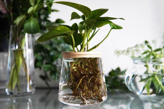 時間の流れを変え、時間を生む植物、WOOTANG
