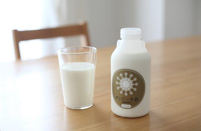 希少品種の濃厚なミルクを食卓に。「加勢牧場ガンジー牛乳」