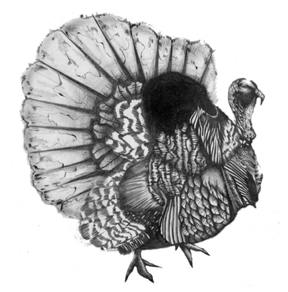 「Peacock」