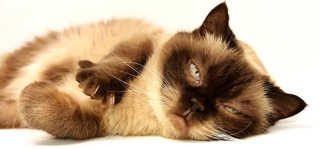 Cat Pet Mieze Short · Free photo on Pixabay (41)