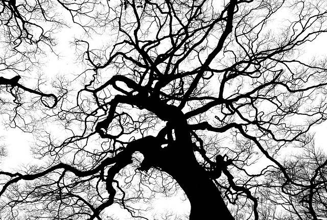 Tree Silhouette Branches · Free photo on Pixabay (585)