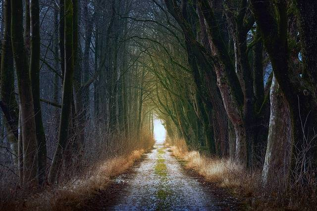 Tree Nature Forest · Free photo on Pixabay (894)