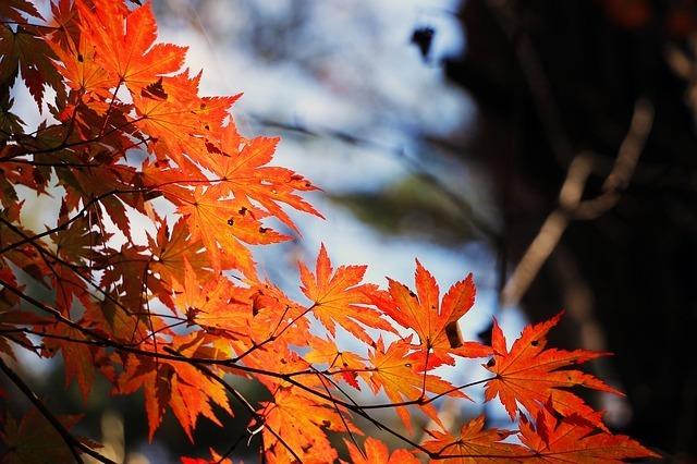 オススメ‼関東で人気の紅葉名所「高尾山」の魅力