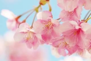 幸せになる春スイーツ特集♡買いたい春スイーツと手作りレシピ集
