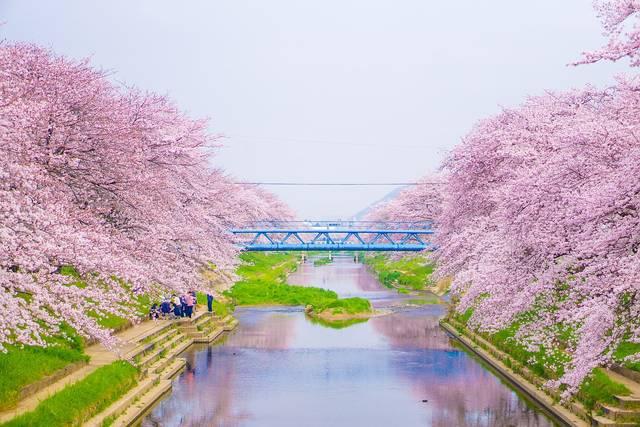 お花見はいつから?桜の種類は?今年のお花見は桜の豆知識でみんなと差をつけよう!