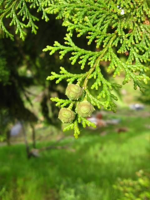 必読!2018年花粉症情報はもう確認した?早めの対処で春を乗り越えよう!