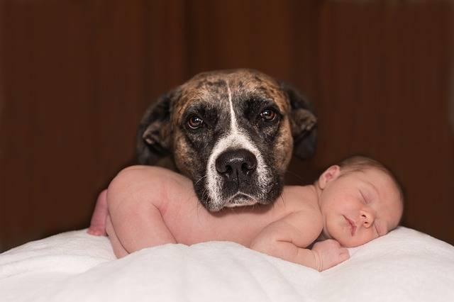 妊娠中を愛犬と楽しく過ごしてリラックス♡妊娠期間ならではのお世話ポイントを総チェック!