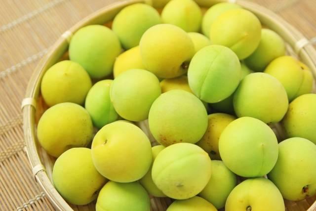 梅ジュースは疲れ知らずで栄養満点♡超簡単な作り方&アレンジレシピを徹底紹介!