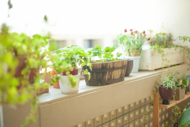 観葉植物インテリア♡初心者でも手軽に♪おすすめ実例10選!おしゃれに見せるコツと飾り方は?