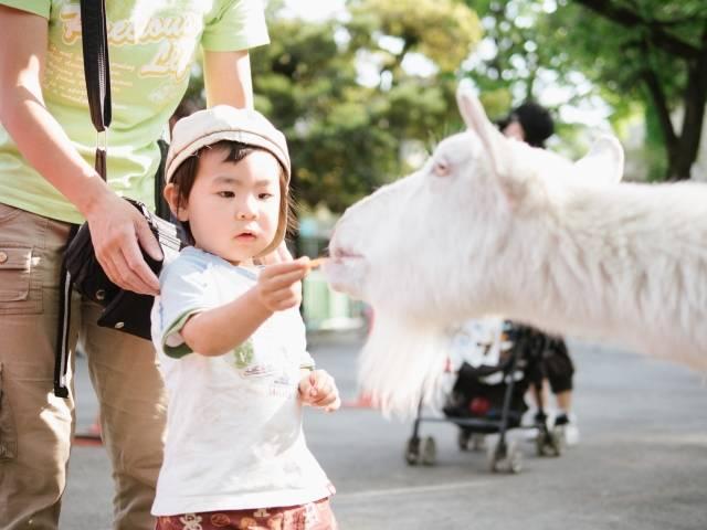 【家族で動物園/全国版人気13選】子供とのお出かけに♪何歳から?持ち物は?疑問も解決♡