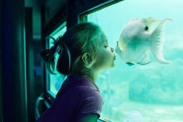 【家族で水族館/全国版・人気8選】子供が喜ぶ4つのポイントに注目♪ショーやふれあい体験も♪