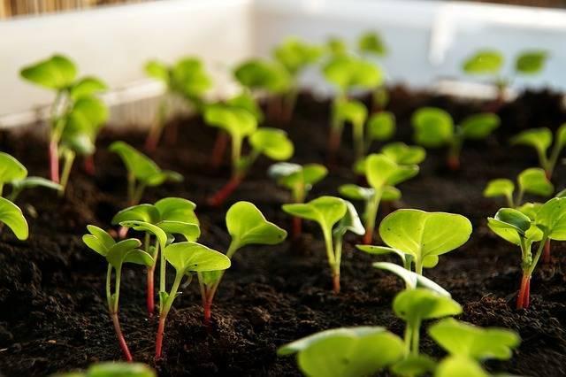 簡単に水耕栽培!収穫もできて家族で育てる楽しみを勉強できるおすすめの野菜を紹介!