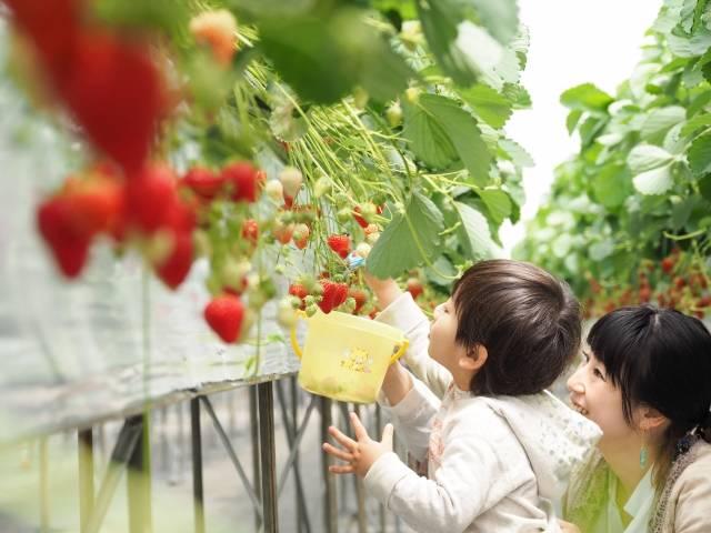 2019最新!関西イチゴ狩り人気スポット8選♡オープン時期や食べ放題など特徴を徹底比較♪