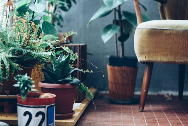 ボタニカルインテリアおしゃれ実例14選♡最新トレンドスタイルで部屋の印象を爽やかに!