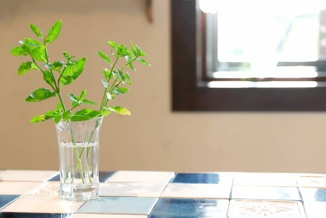 癒しのインテリア実例16選♡観葉植物や可愛い雑貨など今すぐ取り入れたいアイテム大公開!