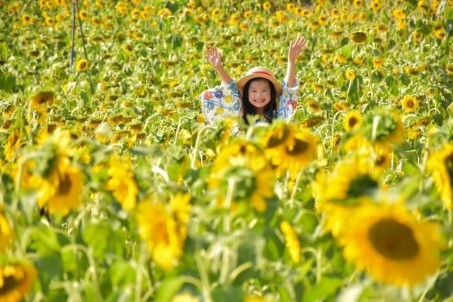 【関西】夏休みのお出かけに行きたい注目スポット16選!家族みんなでいっぱい楽しもう!