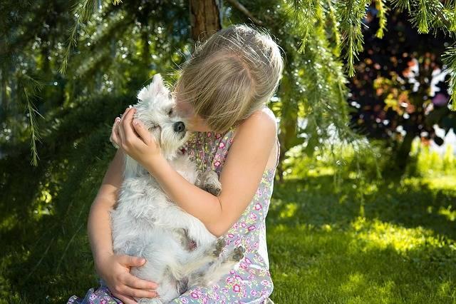 """""""犬・猫""""におすすめのペット保険5選!大切な家族の一員に安心の保障を付けよう!"""