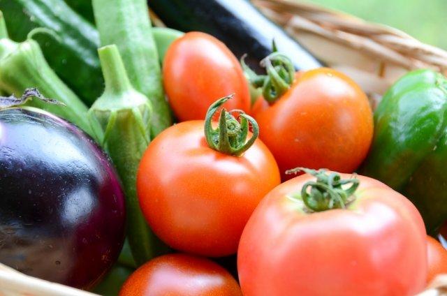 親子で家庭菜園がおすすめ!子供の野菜嫌い克服や食育にも!育てやすい種類から始めてみよう