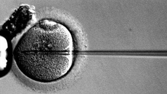 中国で(また)ヒト受精卵の遺伝子編集。今度はHIVへの免疫を埋め込み|ギズモード・ジャパン (9133)