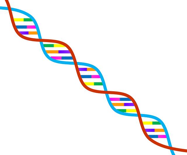 無償のイラストレーション: Dna, 遺伝学, シンボル, 生物学, 研究, 科学, 染色体 - Pixabayの無料画像 - 1020669 (21159)